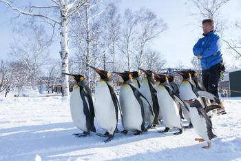 坂東園長先生とペンギン(チラシメイン).jpgのサムネイル画像