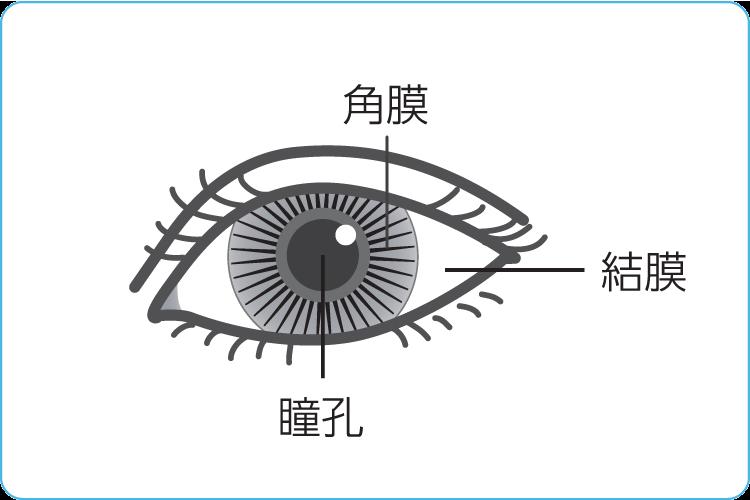 花粉 症 目やに その目の症状は花粉症が原因かも?花粉症で目の症状が現れる理由と対...